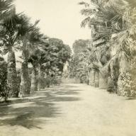 Palm Lined Driveway