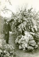 Carpinteria Plants