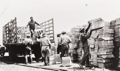 Filipino and Japanese farm workers loading pea crates : Nagano Farm, Morro Bay : 1925.