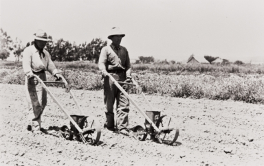 Mr. Hayashi and Mr. Tabuchi, Japanese workers using the hand flower seed planters : 1939.