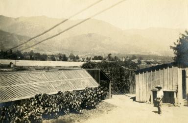 Peter Riedel's Montecito Nursery