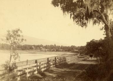 Road to Montecito