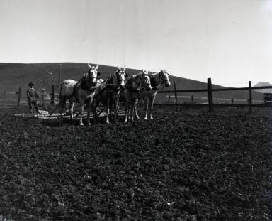 Santa Barbara Agriculture