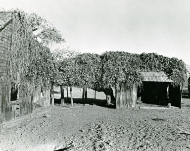 Cuyama