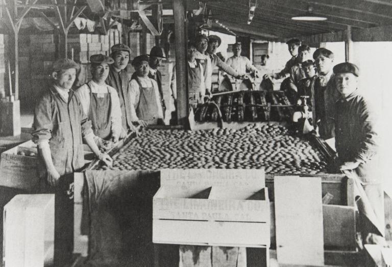 Chinese workers at Limoneira Ranch, Santa Paula.