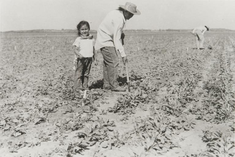 Beet workers.