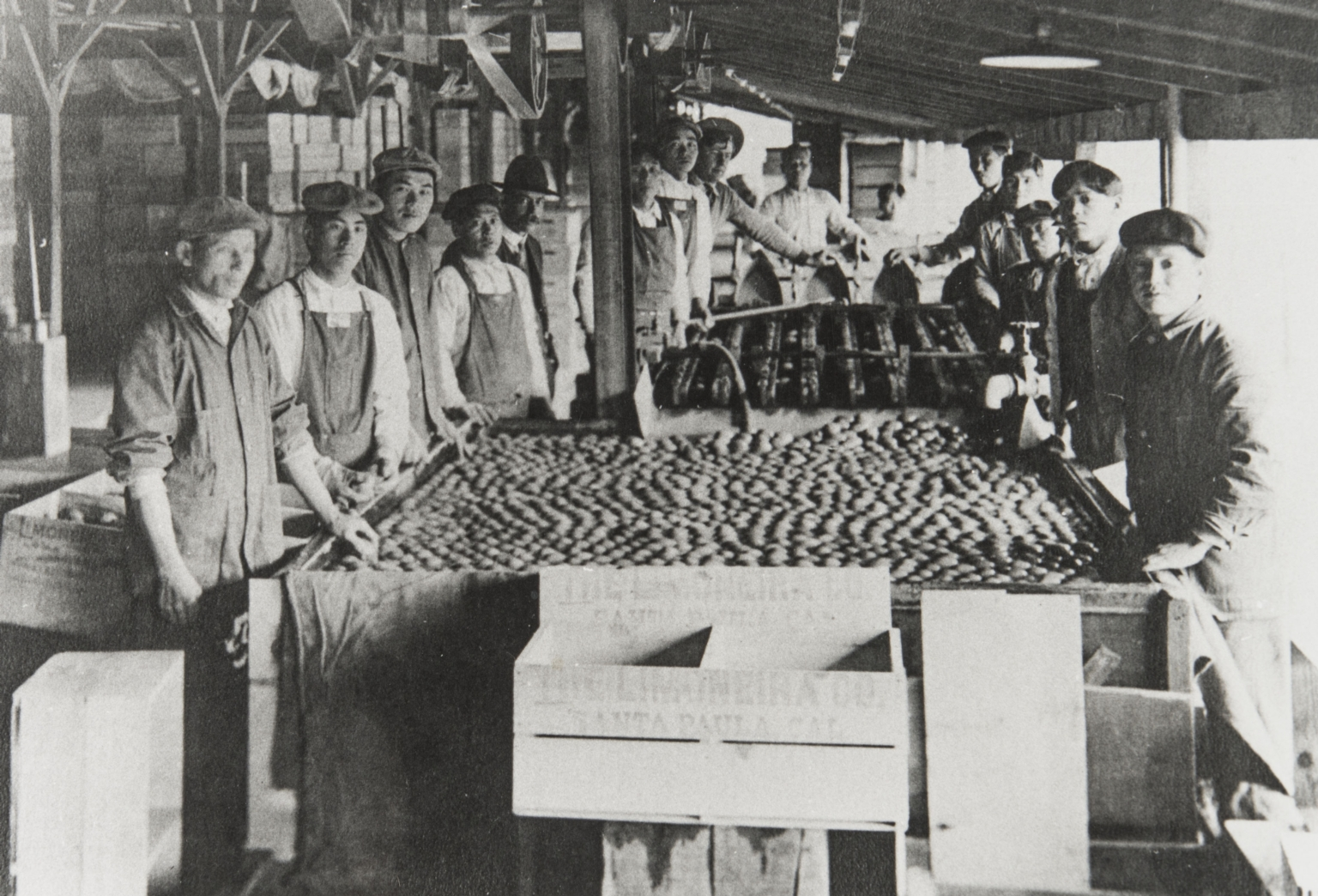 Chinese workers at Limoneira Ranch, Santa Paula.