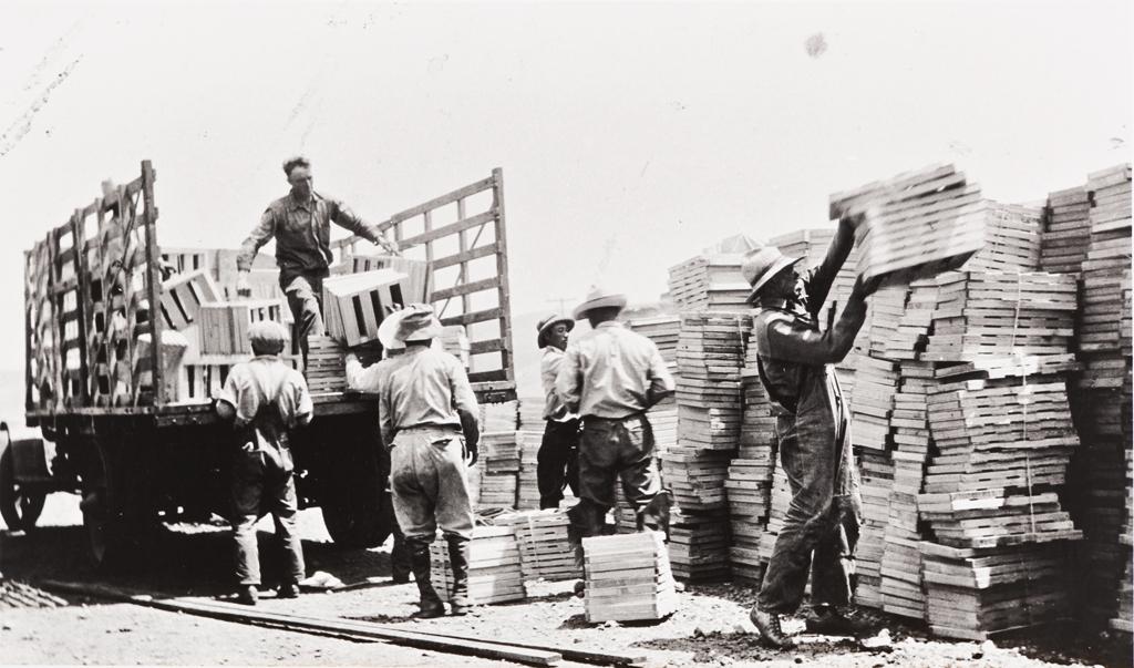 Filipino and Japanese farm workers loading pea crates : Nagano Farm, Morro Bay : 1925.