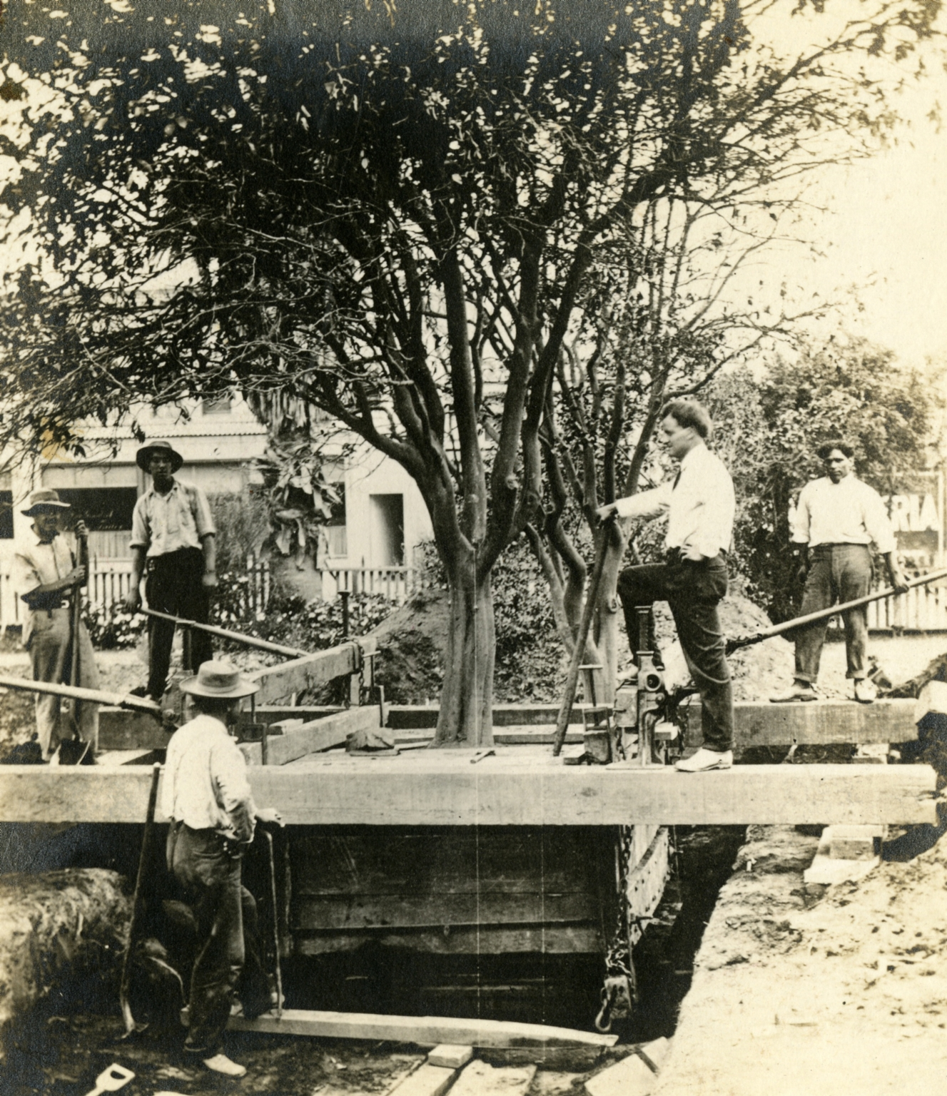 Removal of an Orange Tree