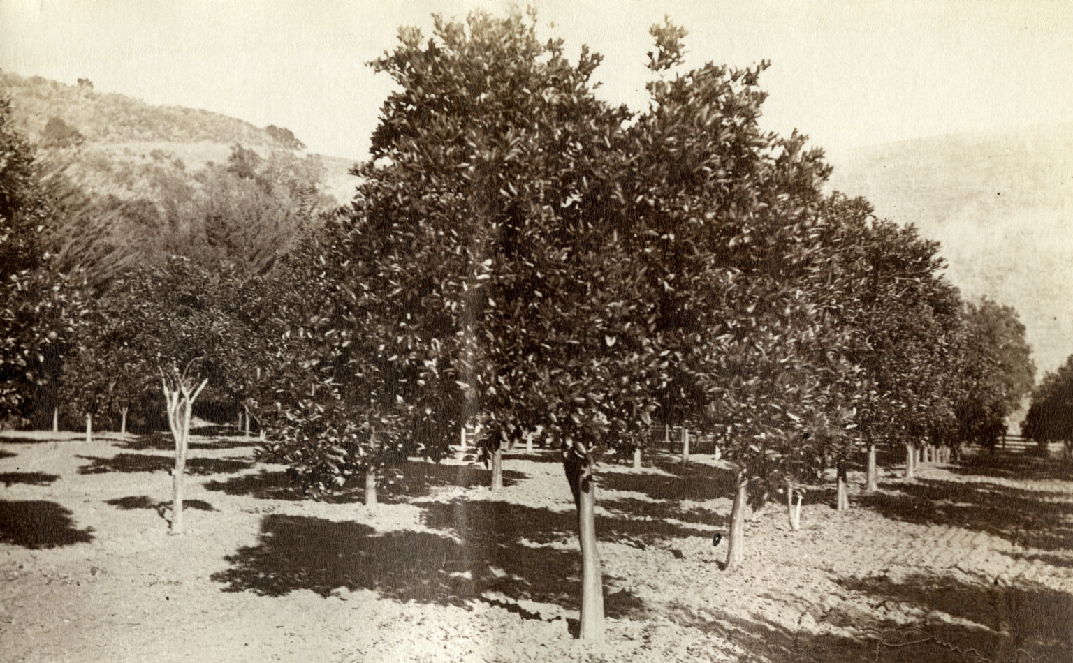 Fruit Orchards