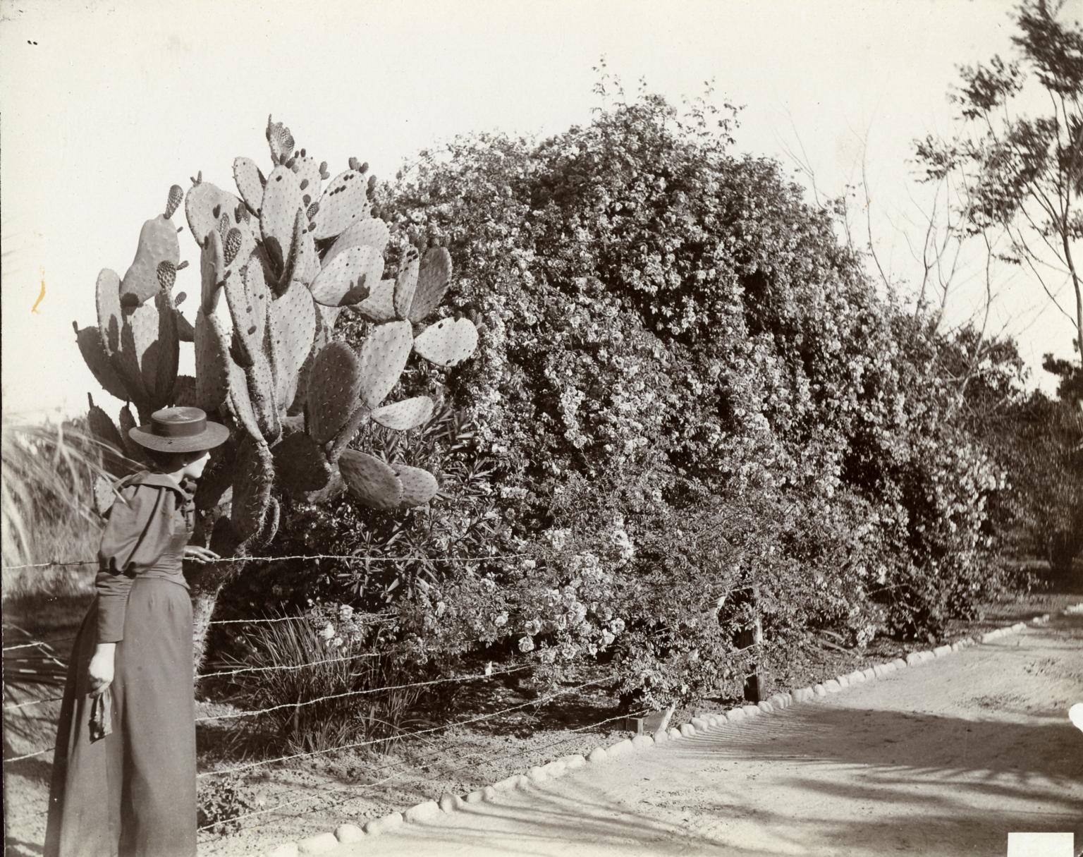 Cactus & Rose Bush
